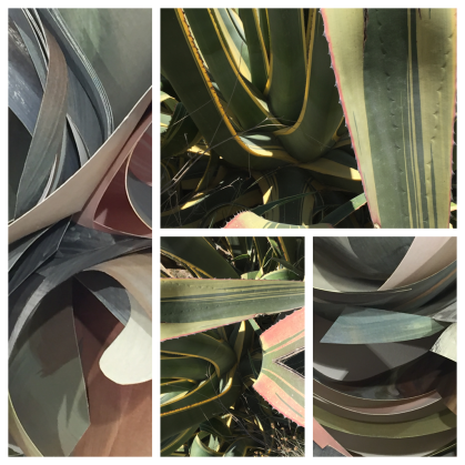 Aileen - agave 2